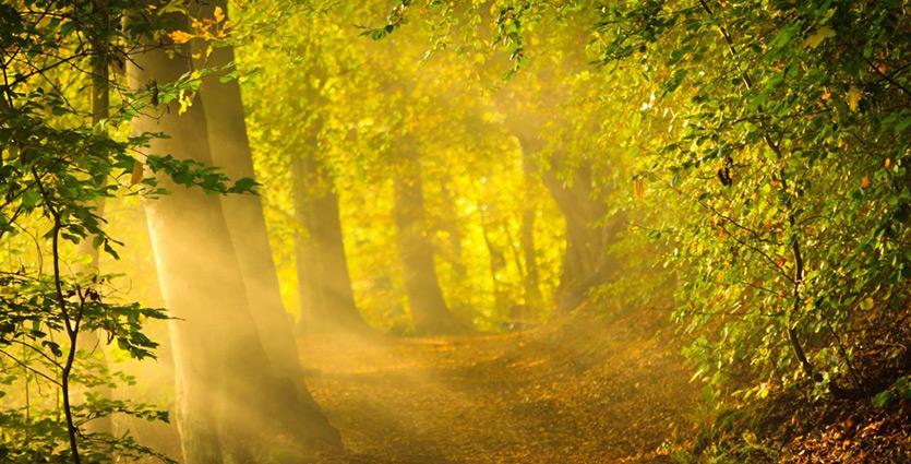 2014 10 19 | Kokia tarnystė patinka Dievui?