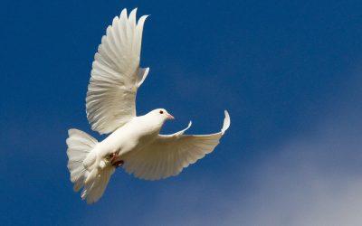 Kiekviena Dievo misija ir Jo darbas pareikalauja Viešpaties meilės, išminties ir jėgos.