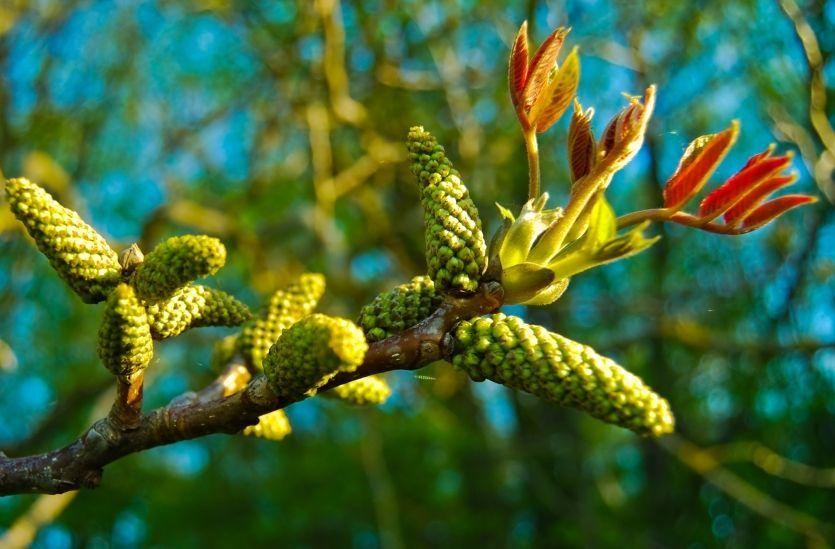 Balandis pražysta pirmaisiais pavasariniais žiedais